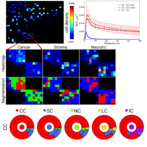 Quantitative cell organization analysis in tissues